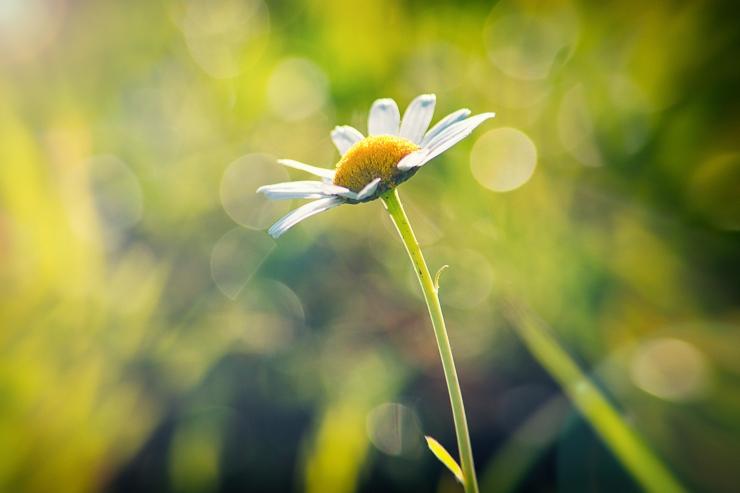 Kevadpüha toob kaunilt päikeselise ilma