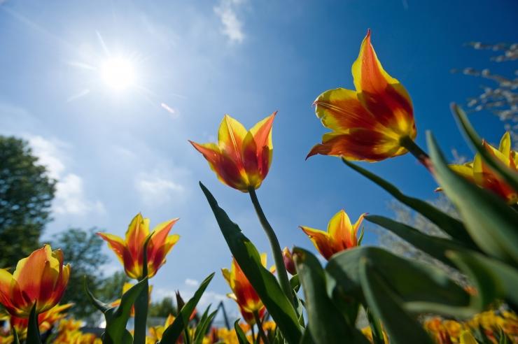 Maikuu teine päev toob mõnusa päikesepaiste