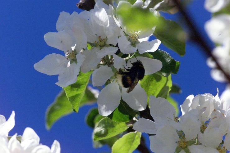 Mesilate piirkondades tuleb taimekaitsevahendeid kasutada varahommikusel või hilisõhtusel ajal