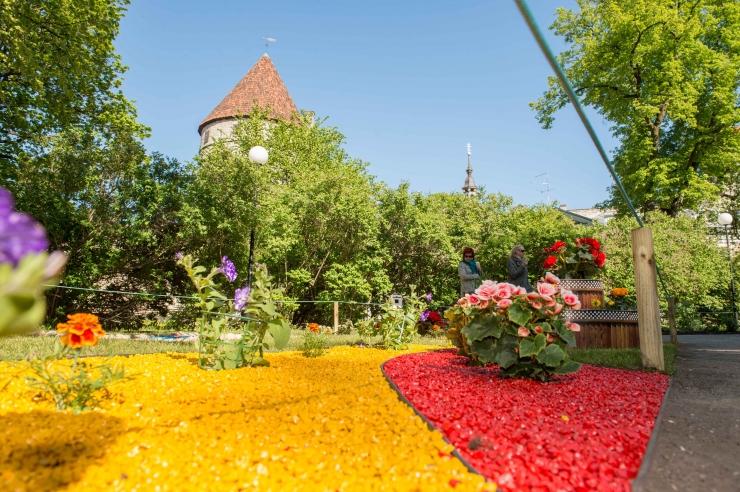 Lillefestival algab tänavu kevadmissi valimisega
