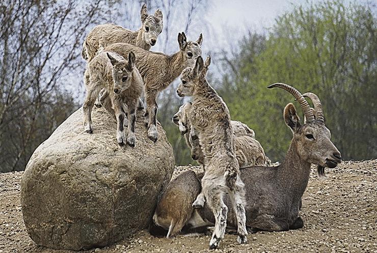 Loomalaste sündimine kogub järjest tuure