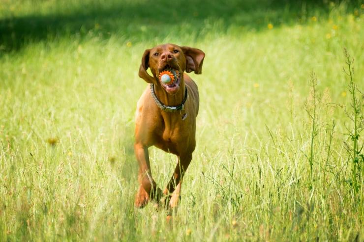 Riik tõhustab loomakaitse vihetele reageerimist