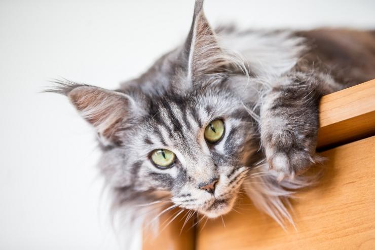 Jurist: loomi puudutavate õigusaktide suur hulk tekitab segadust
