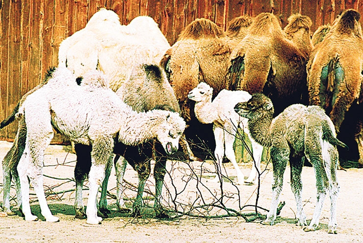 Tule perega kaamelitepäeva tähistama!
