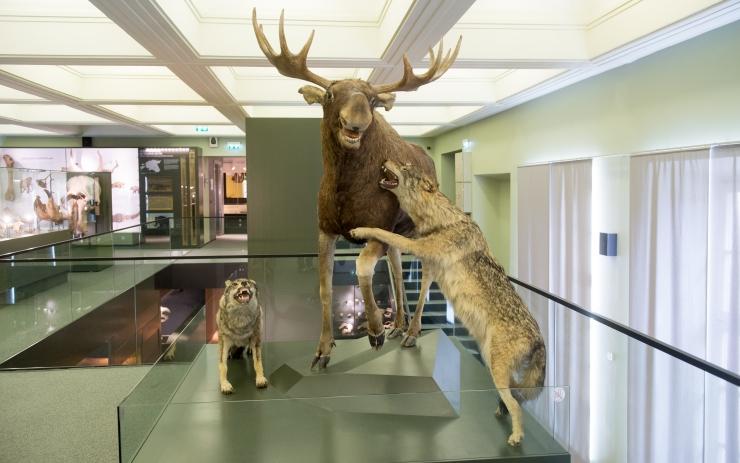 Eesti Loodusmuuseumi Suvemuuseum tuleb taas