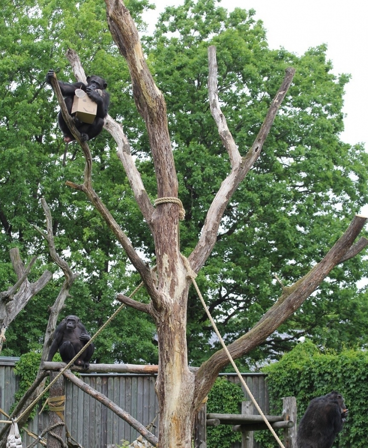 Loomaaia elevanditorni ees sai valmis Aafrika värvides ringpink