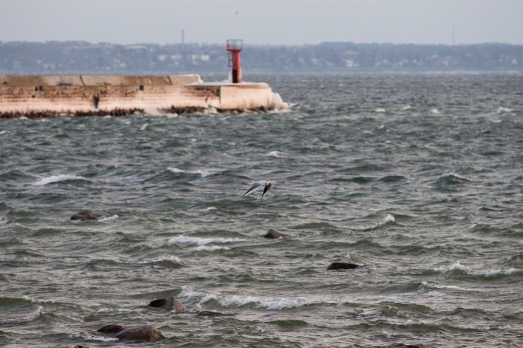 Vali tuul võib Läänemerele tuua kuni kahemeetrised lained
