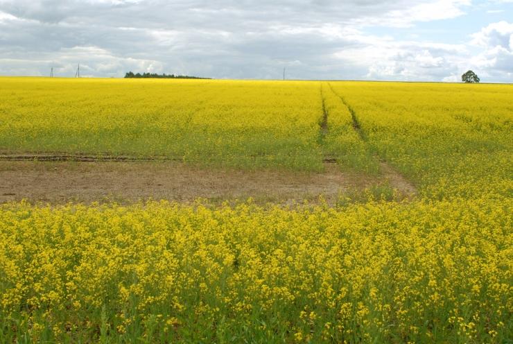 Põllumajandusamet tuletab meelde: taimekaitsetöödel peab järgima kõiki ohutusnõudeid