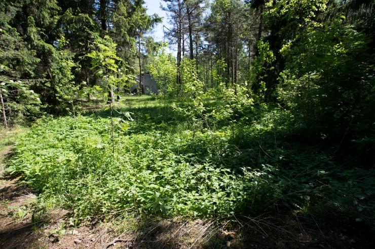 ELF: Eesti pakutud süsinikuheite arvestusreeglid on metsavaenulikud