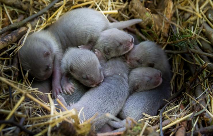 Aita kaasa: Tallinna loomaaed otsib naaritsa poegadele nimed