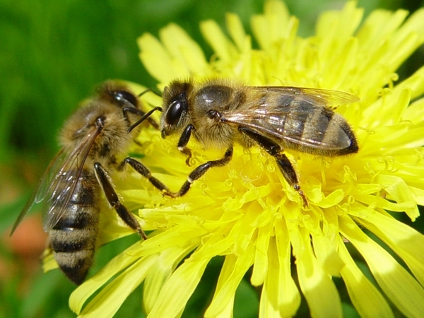 Koda taunib taimekaitsevahendite kasutusreeglite tahtlikku rikkumist