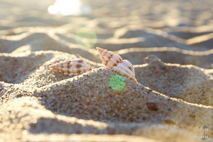 Pikakari ja Pirita rannas saab osaleda keskkonnatelgi töötubades