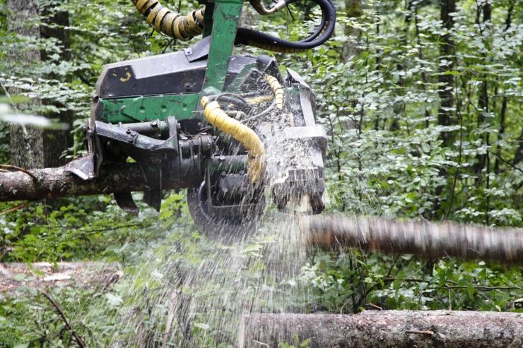 Amet peatas asjaolude täpsustamiseks Harku järve ääres lageraie