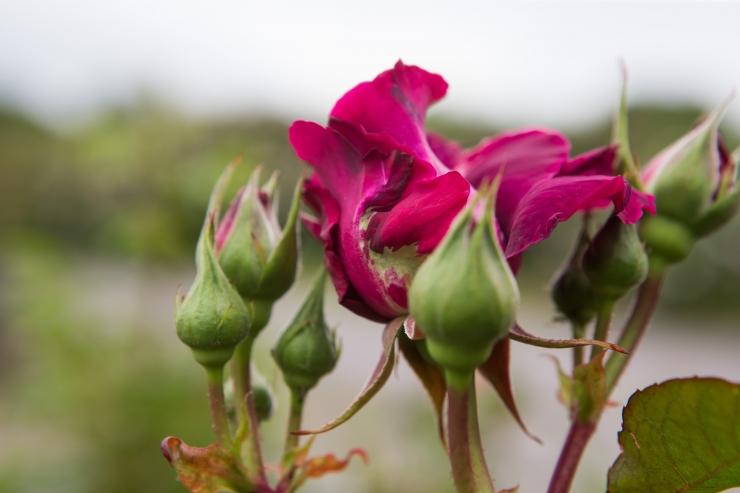 Botaanikaaias toimuvad korralised hooldustööd