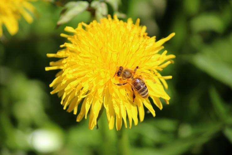 Maris Raudsepp: taimekaitse ja mesindus saavad kõrvuti eksisteerida