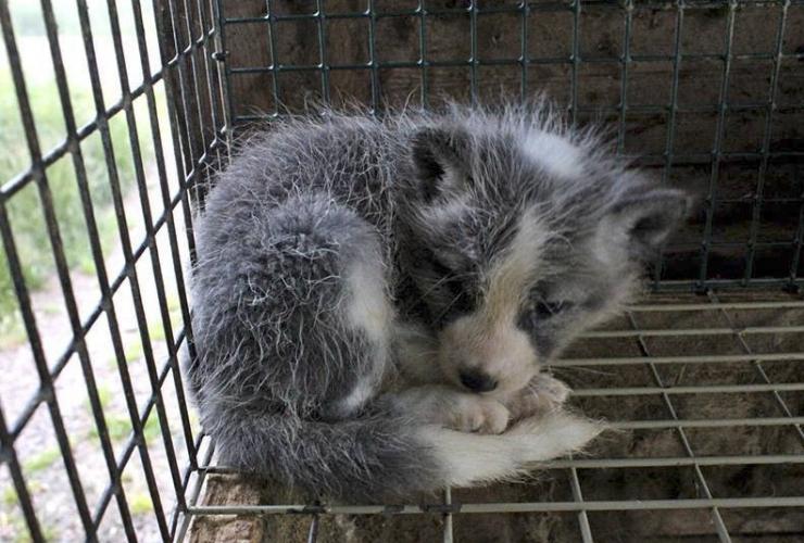 Loomus: mõtleme üheskoos, kuidas loomi paremini aidata