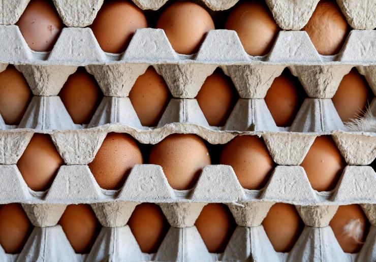 Belgial kulus EK teavitamiseks putukamürgistest munadest umbes kuu