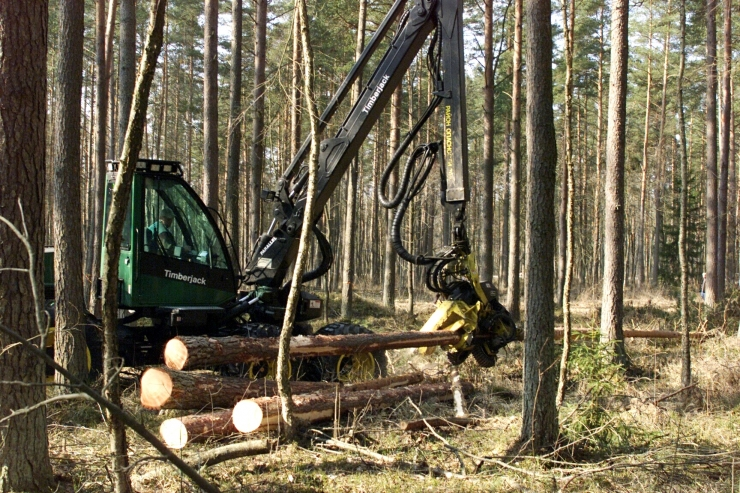 Amet tõmbas Harku järve äärsele lageraiele pidurit