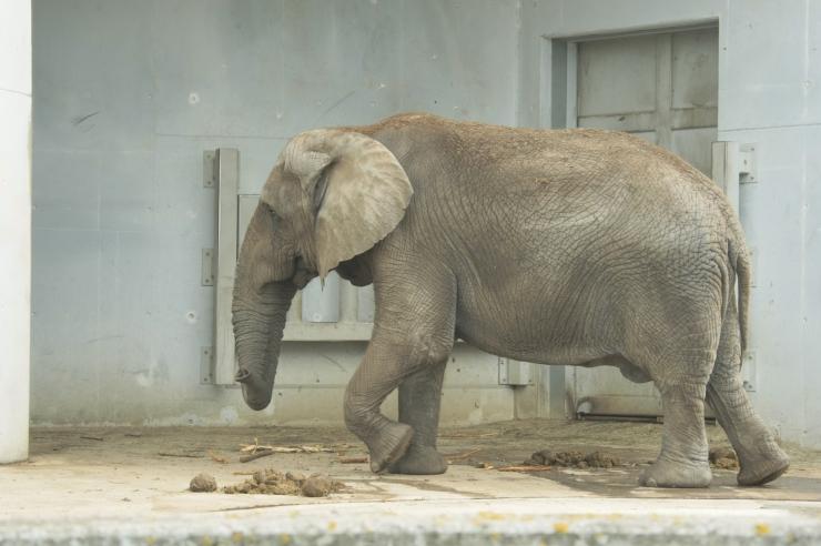 FOTOD! Loomaaias saab elevandipäeval hiiglastega lähemalt tutvuda!