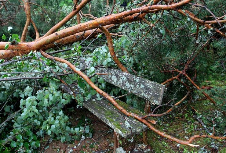 Metsale tekitatud tormikahjustused on veel selgitamisel