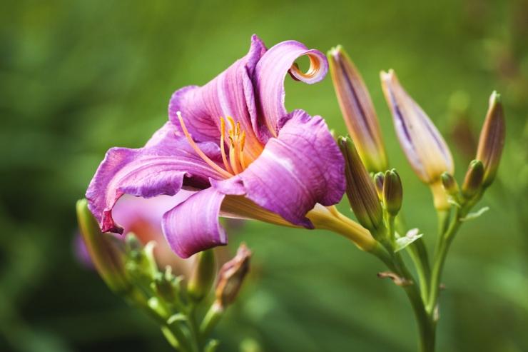 Botaanikaaed kutsub püsilillede ja elulõngadega tutvuma