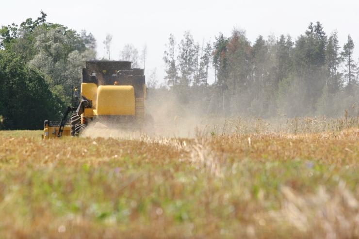 Koda: viljalõikuse hilinemine paneb teraviljakasvatajad surve alla