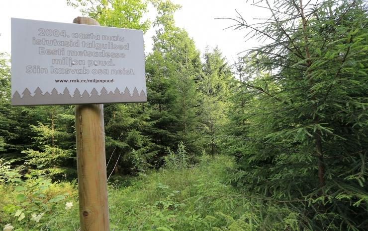 RMK tahab range kaitse alla võtta lisaks 26 500 hektarit metsa
