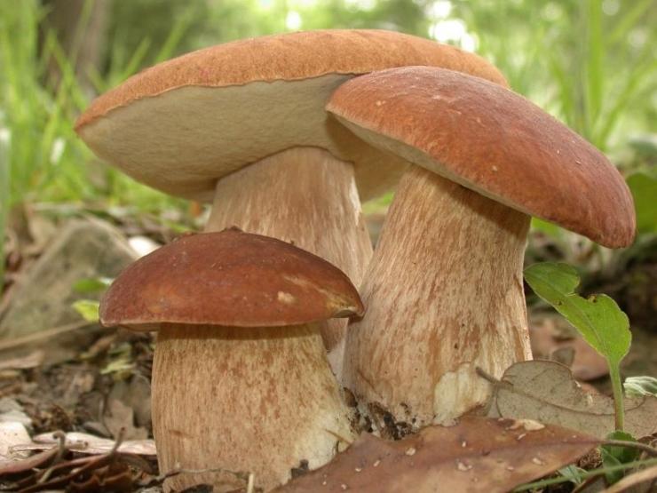 Öökulli akadeemia uurib, millised seened kasvavad Iraanist Paapua Uus-Guineani