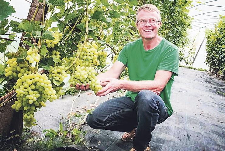 AIANDI OMANIK: Eestis kasvavad maitsvad iseloomuga viinamarjad