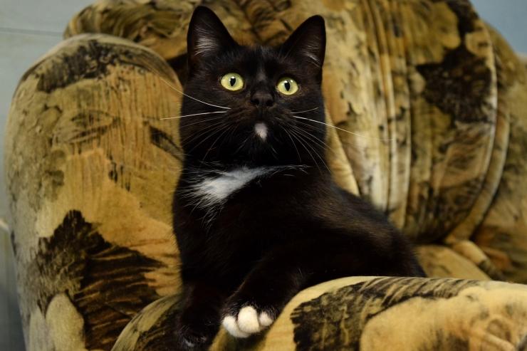 Varjupaikades algas musta kassi kuu