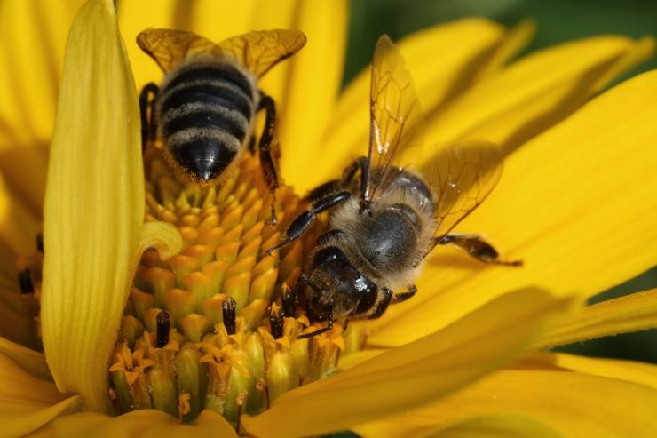 OTSE KELL 14! Maaelukomisjon arutab Euroopa Toiduohutusameti juhtidega seakatku ja pestitsiidide probleeme
