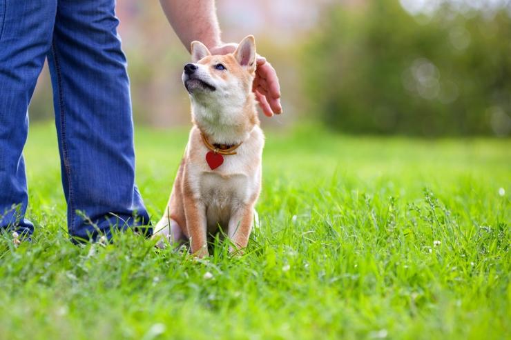 Kesklinna ja Kristiine piiril korrastati haljasala ja rajati koerte jalutusväljak