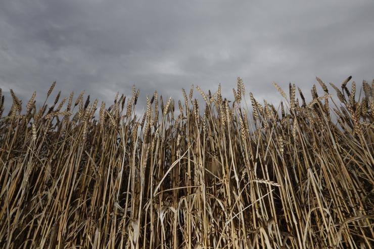 Leedu palus Euroopa Komisjoni abi farmerite vihmakahjude hüvitamisel