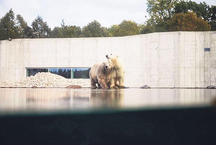 Tule jääkarude uhket kodu avama!