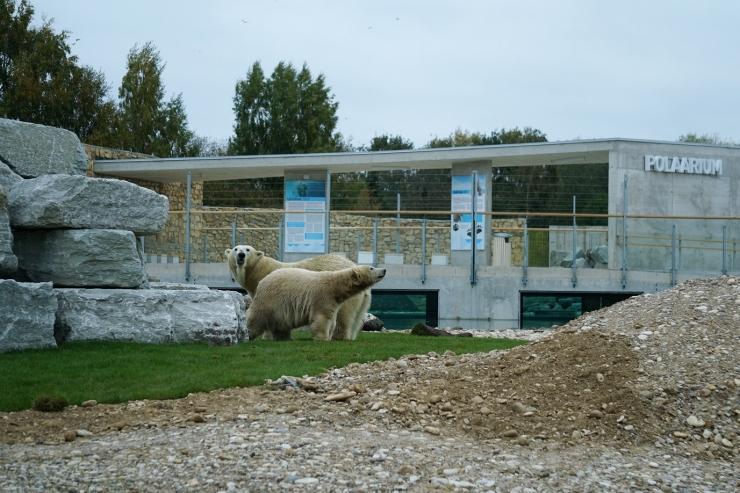 Oktoobri esimene nädal on möödunud jääkarude tähe all
