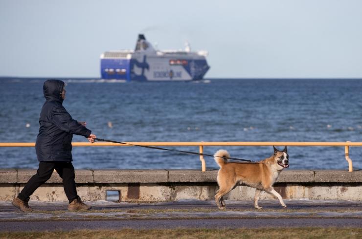 IDEE: Tallinnale võiks juurde liita tehisliku poolsaare ehk eel-Helsingi