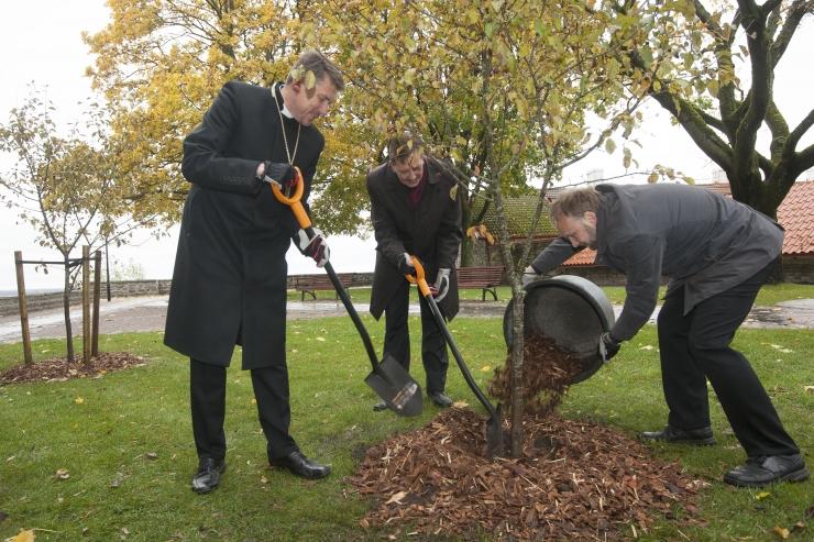 FOTOD! Piiskopi aias kasvavad nüüdsest kaunid õunapuud
