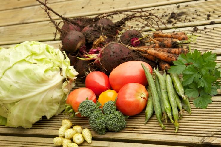Tallinna botaanikaaias saab kuulata loenguid kartulist ja köögiviljadest