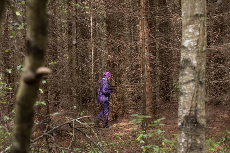 Öökulli akadeemia uurib – kas eestlased on metsarahvas?