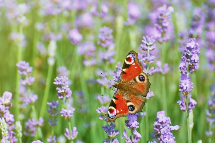 Saksa teadlastele teeb muret putukate arvukuse järsk kahanemine