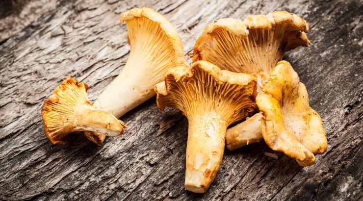 Loodusmuuseumi seeneviktoriinil selgusid parimad noored seenetundjad