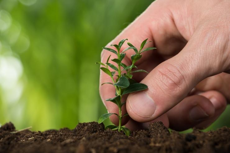 OTSE: Teadlased arutavad, kuidas metsa hoida