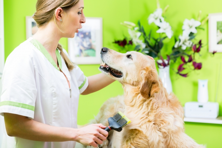 Lemmikloomade kahjuhüvitised on aastaga kahekordistunud