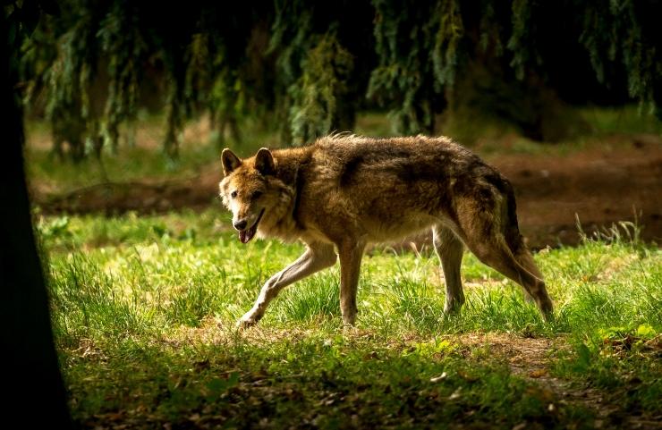 Loodusmuuseumi loodusõhtul räägib Marju Kõivupuu loomadest Eesti pärimustes