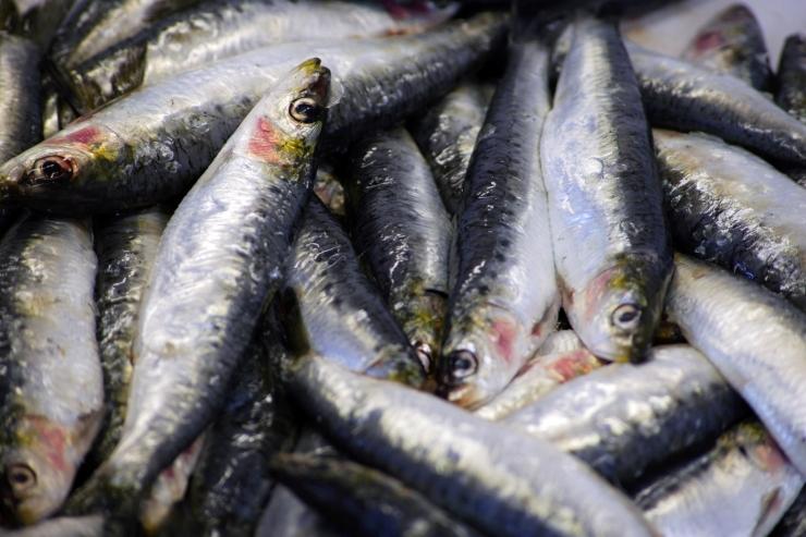 Alamõõdulise kala püüdja peab hüvitama üle 90 000 euro keskkonnakahju