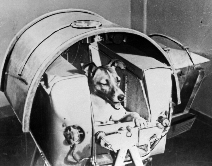 Kuuekümne aasta eest saadeti kosmosesse hulkurkoer Laika