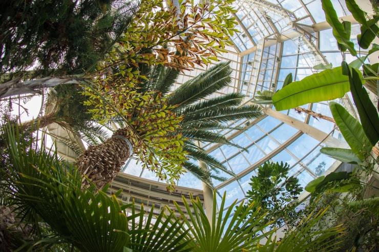 TÄNA! Tallinna botaanikaaias toimub kaunis sügisene dendropäev