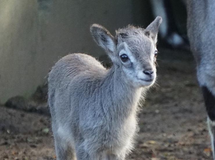 Loomaaia elanikud on endale kena talvekasuka selga kasvatanud
