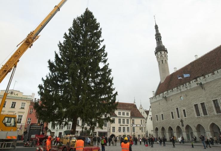 Tallinna esinduslikem jõulupuu püstitatakse Raekoja platsile juba homme