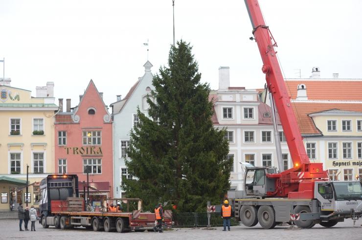 FOTOD! Jõuluvana tõi jõulukuuse Raekoja platsile
